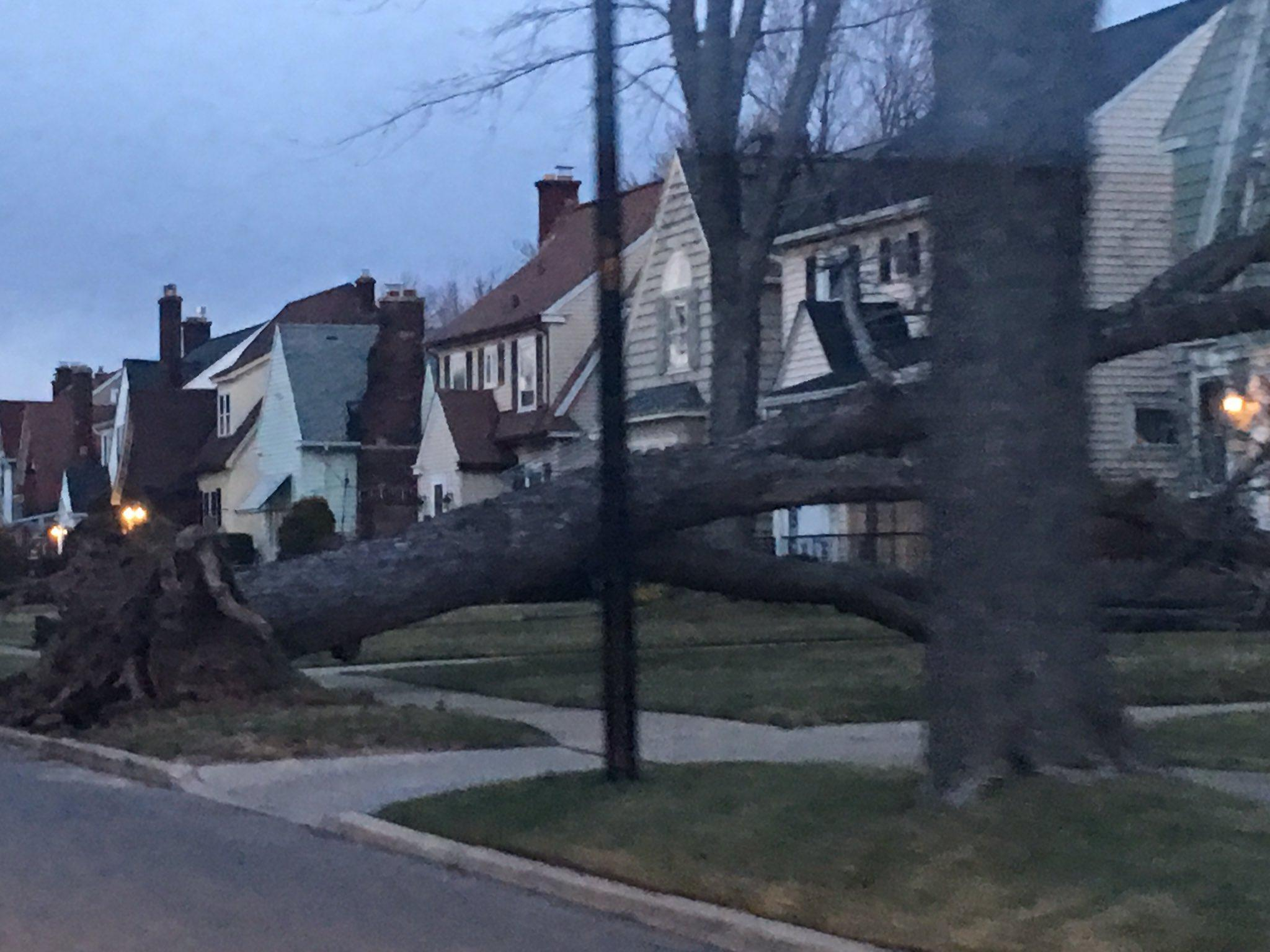 Tree damage in Kenmore from past stormy weather