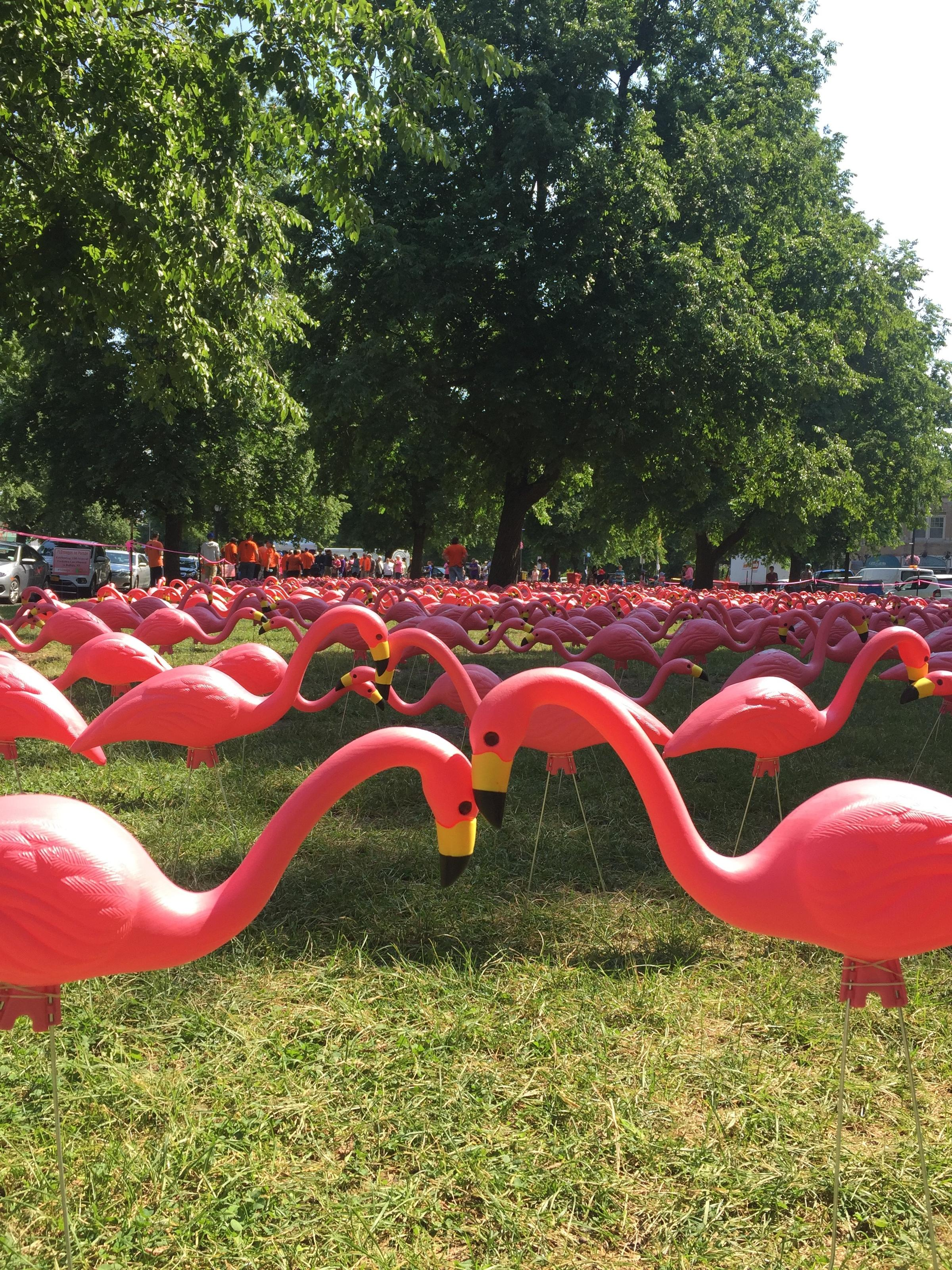 Buffalo Sets Kitschy World Record For Pink Flamingos Wbfo