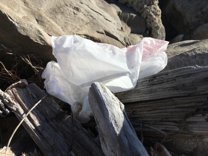 Plastic bag in Buffalo harbor