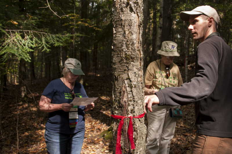 Stephen Handler discusses the projected fate of a yellow birch tree under climate change.
