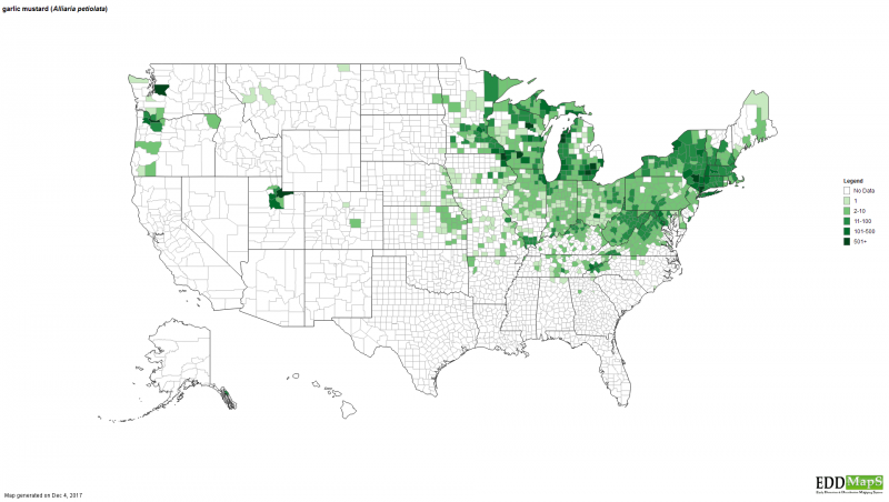 This map shows where garlic mustard has spread in the U.S. and its density.