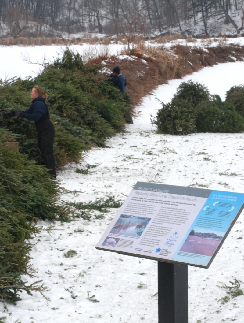 Christmas tree berm at the Royal Botanical Gardens.