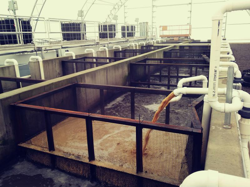 Stillage from a distillery being processed through an indoor aquaculture  system.