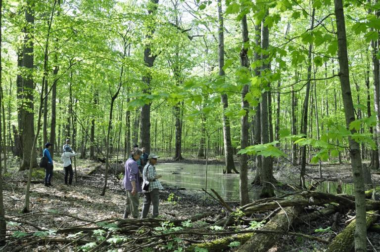 Margery Gallogly Nature Sanctuary / WNY Land Conservancy