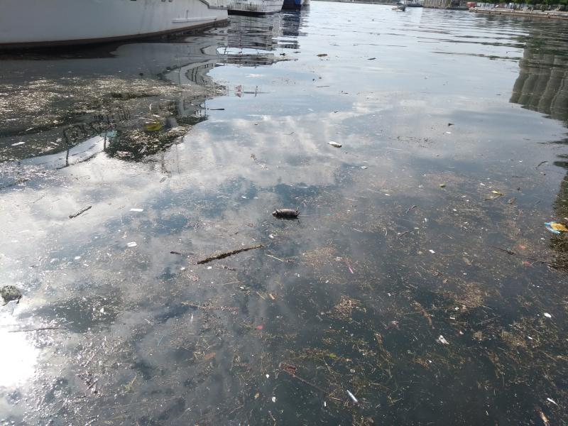 Report shows elevated levels of E. coli and floatables is a persistent issue in Toronto's harbor.