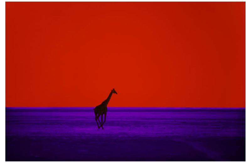 'Giraffe,' 1964