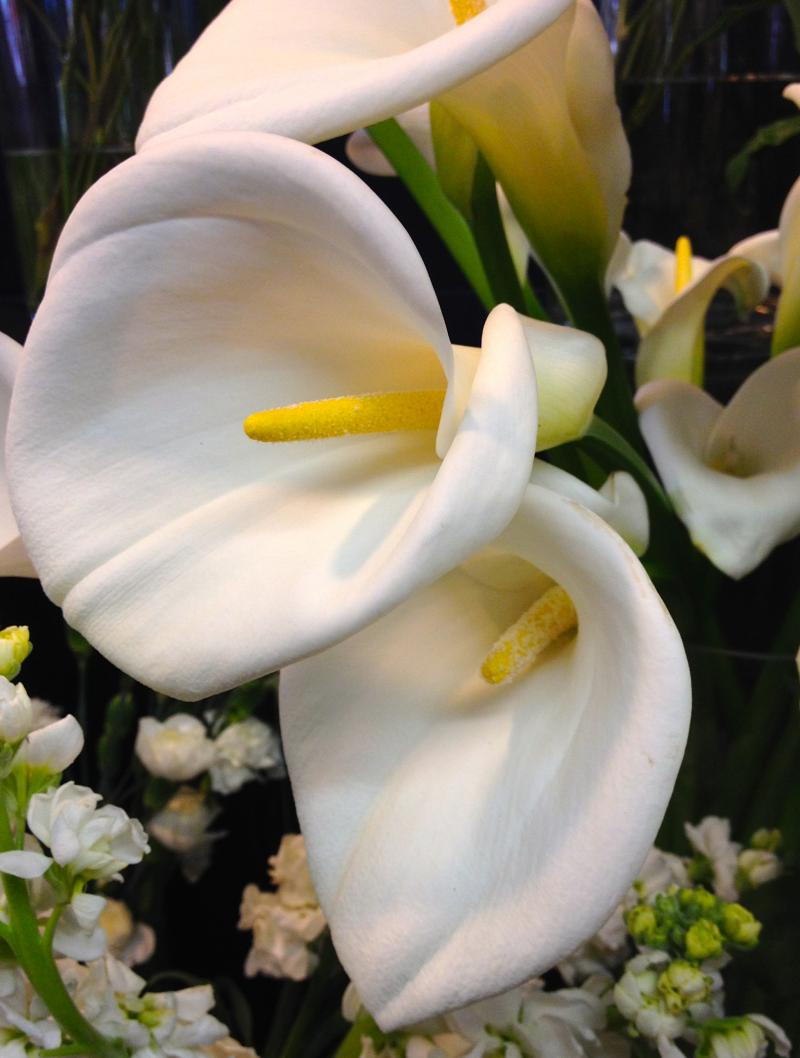 For the king or queen in your life, calla lillies express a certain regal tone in an arrangement.