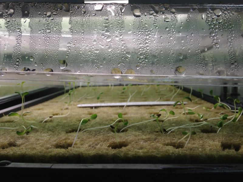 Get Fresh Farms in Fort Wayne grows a variety of vegetables through hydroponics, a process that uses no soil.