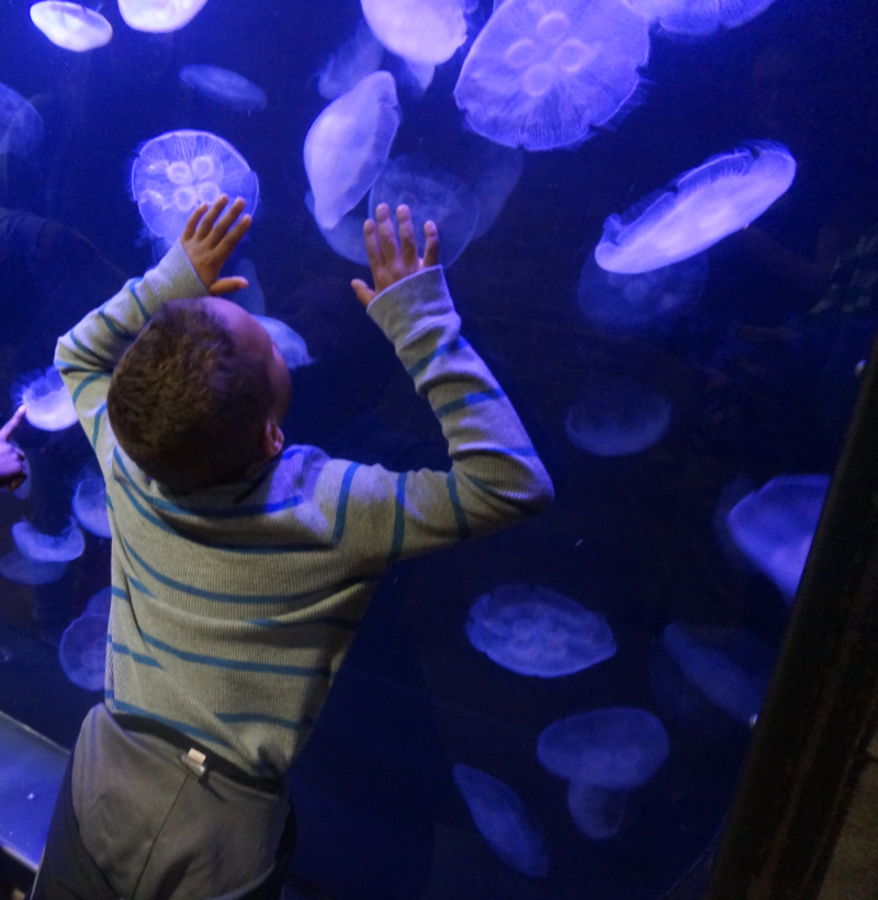 The Reef exhibit includes a 600-gallon moon jellyfish tank.
