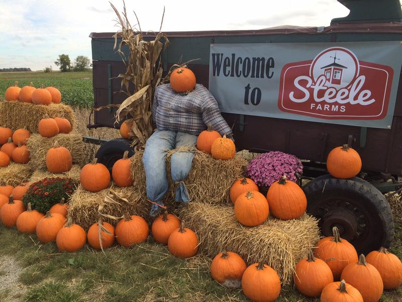 All of the pumpkins at Steele Farms had to be bought from another farm.