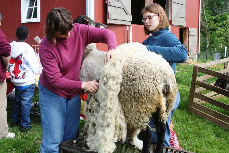 """Going from """"wool to wear"""" all starts here."""