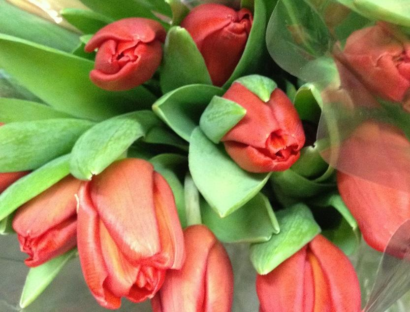 Flowers Are The Right Gift For So Many Situations They Great Saying I Love You But Just As Good Occasions Such Holidays Birthdays
