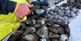 Changes are coming to Wellfleet OysterFest