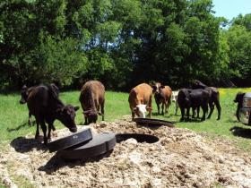 Cows investigate a seismometer being installed as part of the U.S. Array project.