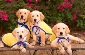 Pups in training