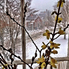 Spring Inside, Winter Outside.