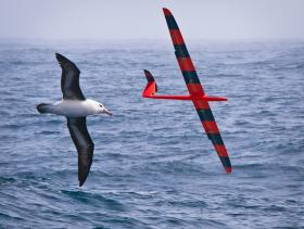 Unmanned gliders could use the same mechanism as albatrosses to soar over the ocean.