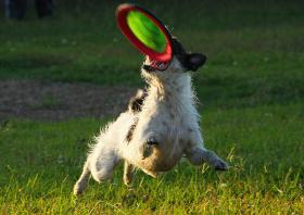 """Dog games and fun for owners will highlight """"Paws in the Park,"""" the Animal Rescue League fundraiser, this Saturday at Drummer Boy Park in Brewster."""