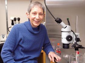 Patricia Hunt, Washington State University
