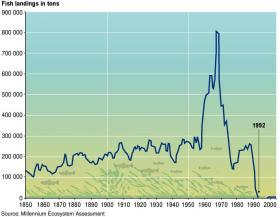 Some Canadian fishermen saw record catches just before cod stocks collapsed in the early 1990s.