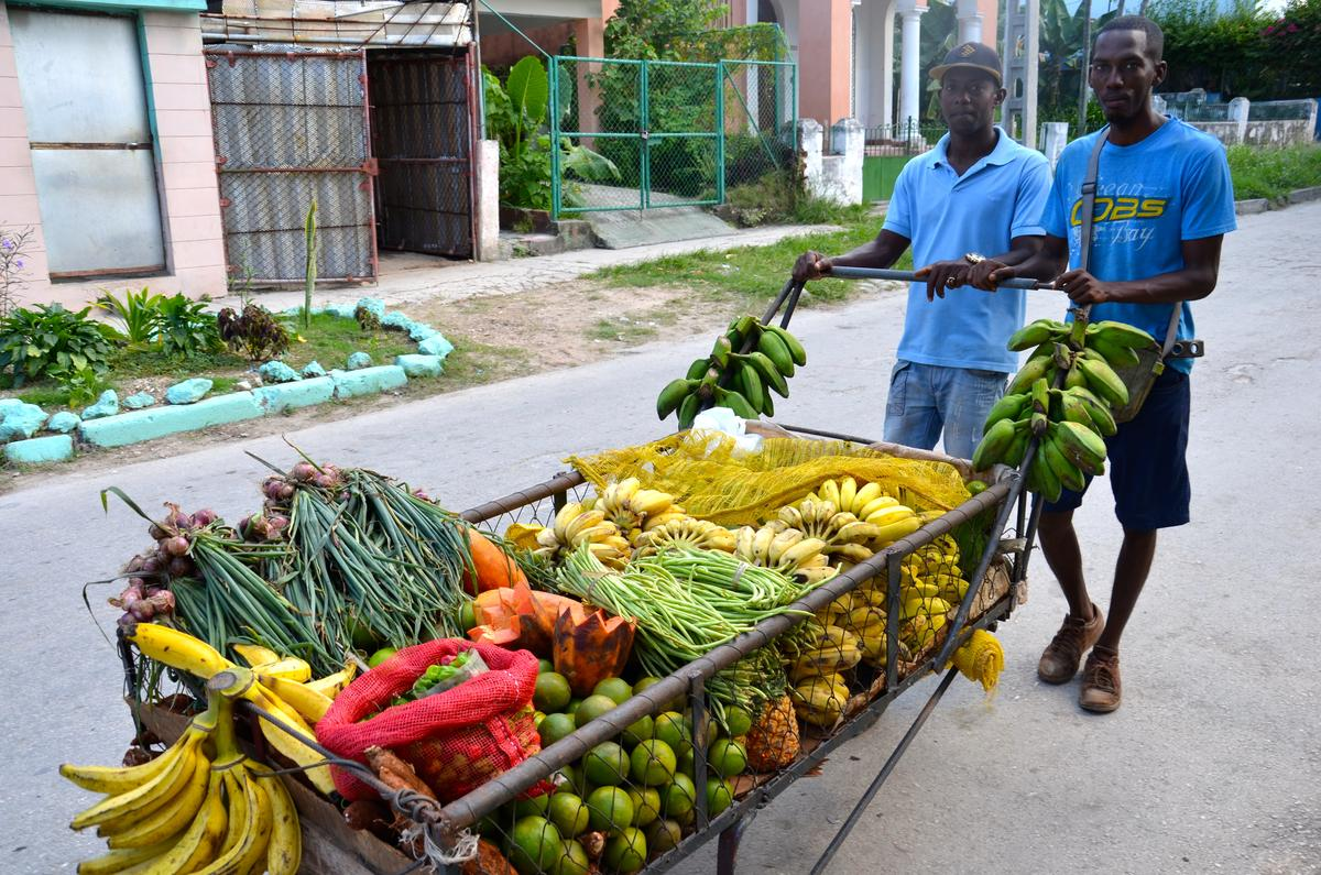 Kubas Agrarökologiebewegung und was wir daraus lernen können | Bildquelle: www.capeandislands.org © Greg Watson | Bilder sind in der Regel urheberrechtlich geschützt