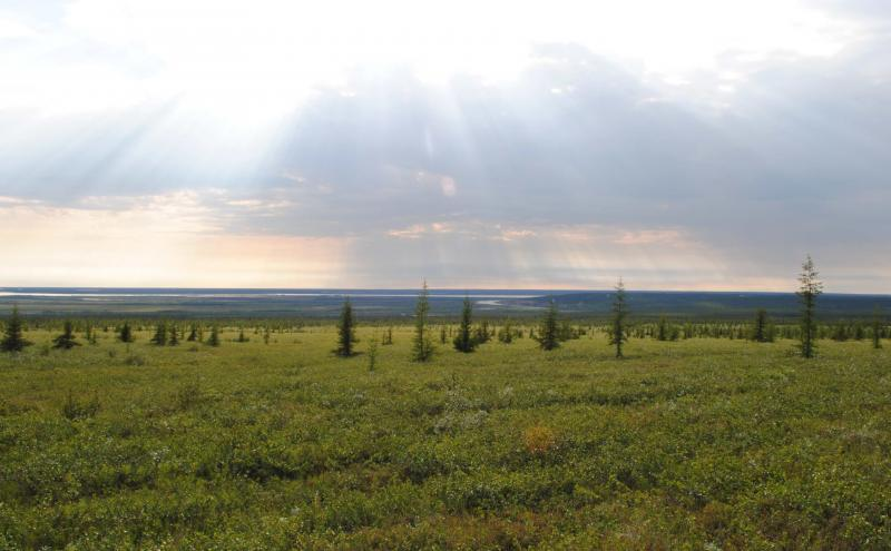 By the 2050's, shrubs and trees could be growing hundreds of miles north of the current tree line in the Arctic.