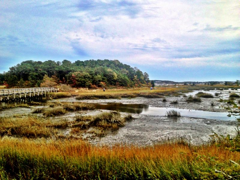 Marshes in Wellfleet.