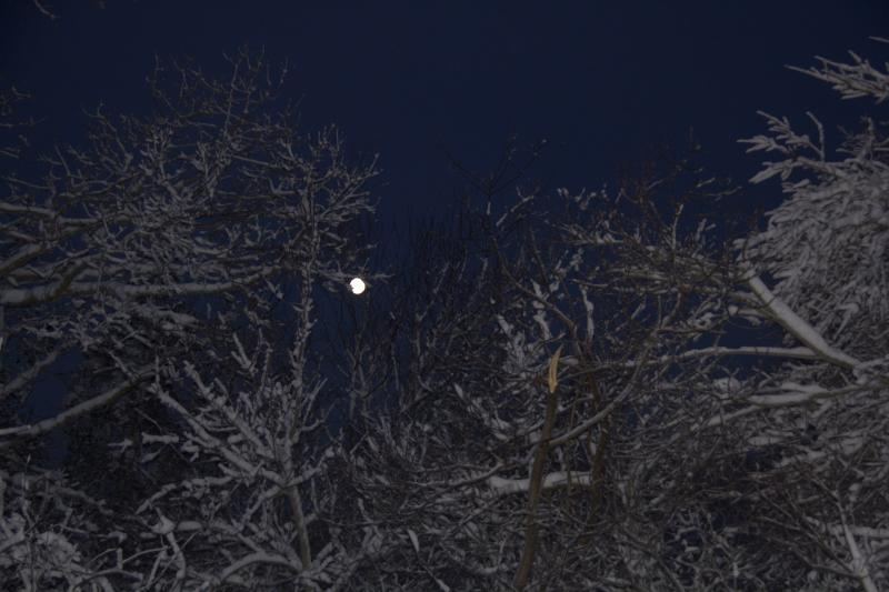 Moon Setting behind Snowy Branches