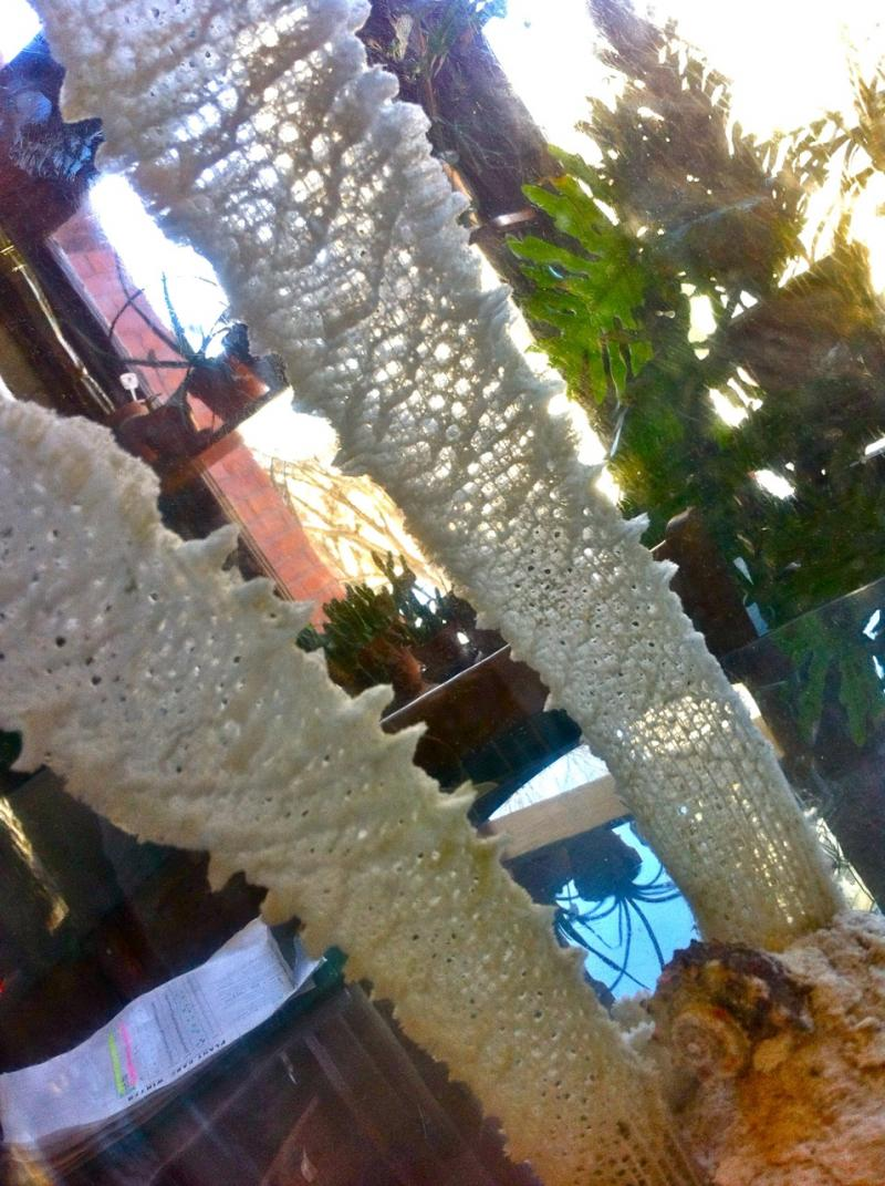 specimen at RISD Nature Lab