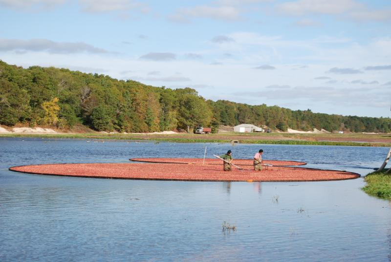 The USDA's new Northeast Regional Climate Hub could help Massachusetts' cranberry growers adapt to climate change.