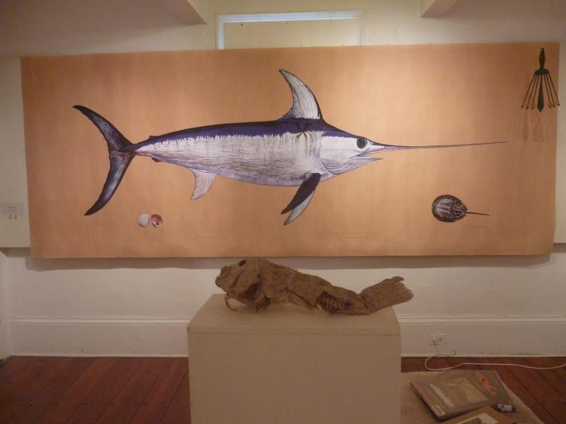 A slightly reduced reproduction of James Prosek's watercolor of a swordfish features in the Ocean Fishes exhibit at Woods Hole Historical Museum through July 31st, 2014.