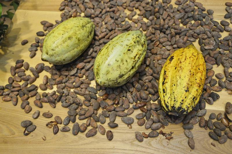 Cacao, as a commodity, reveals much about social and religious differences between Europe and Mesoamerica.