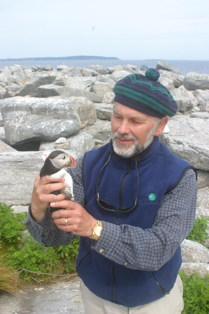 Steve Kress with a puffin at Eastern Egg Rock. \
