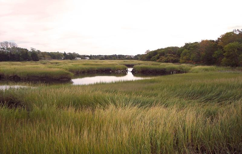 Cape Cod's salt marshes drew early European settlers with the promise of lush grazing and plentiful hay for cattle.