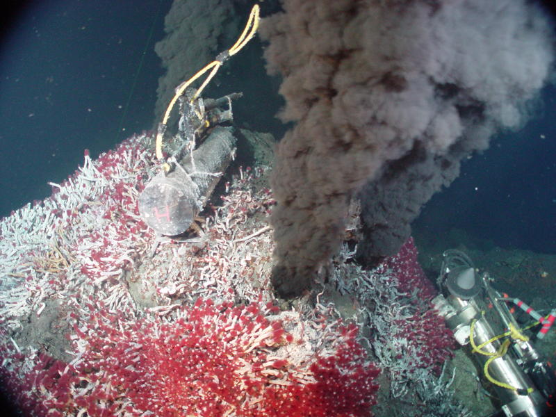 Heat and minerals from hydrothermal vents fuel abundant microbial and animal life, as well as intense scientific research.