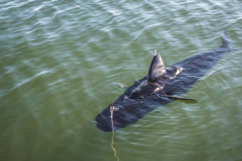 Ghost Swimmer is a fish-shaped robot, currently used by the Navy, but design firm Boston Engineering says it could be modified to monitor fish farms.