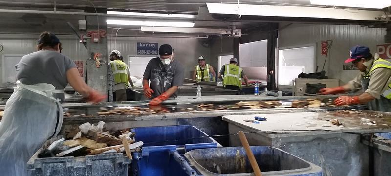 Workers hand-pick contamination out of recycling during the sorting process.