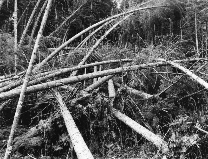 Forest damage from the hurricane of 1938.
