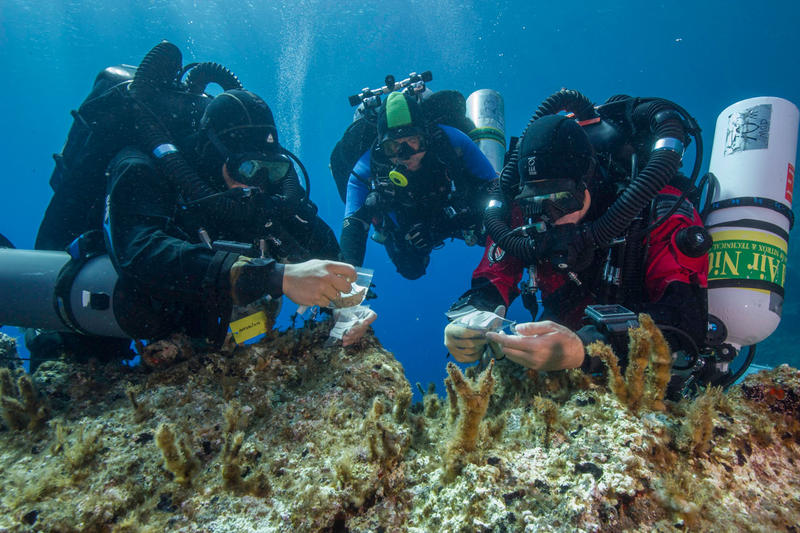 Antikythera team members Nikolas Giannoulakis, Theotokis Theodoulou, and Brendan Foley inspect small finds from the Shipwreck while decompressing after a dive to 50 m (265 feet).