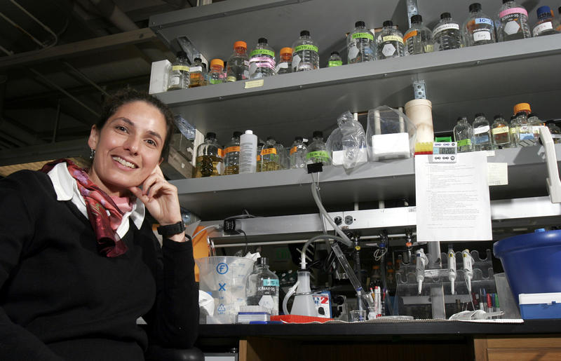 Evolutionary biologist Nicole King