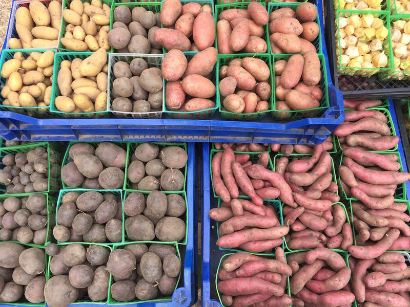 Red, white and blue potatoes at the Daniels farm stand - with some ground cherries on the side - at West Tisbury Farmers Market.