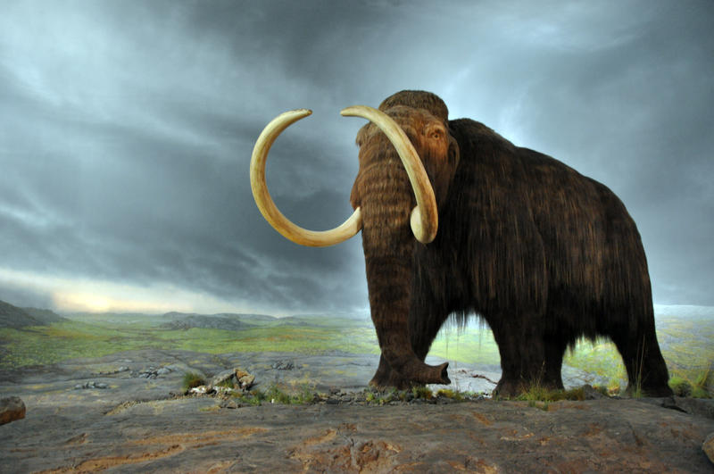 Beth Shapiro explains how to clone a mammoth, and asks whether we should.