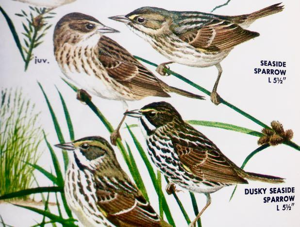 Migrant birds are returning to Cape Cod, the Islands, and the South Coast