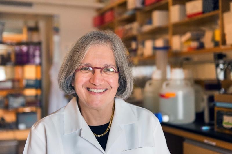 Dyann Wirth in her lab at Harvard University