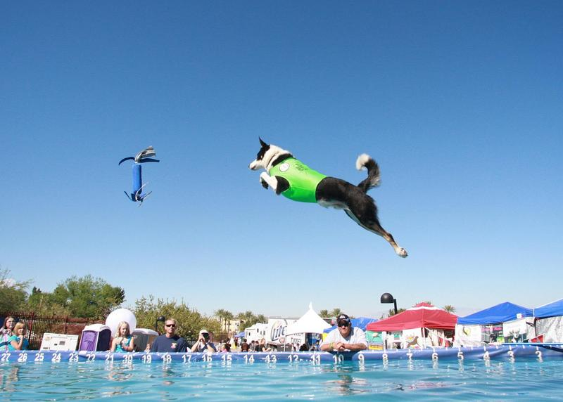 This weekend DockDogs comes to the Paw Palooza, the Cape's largest dog festival.