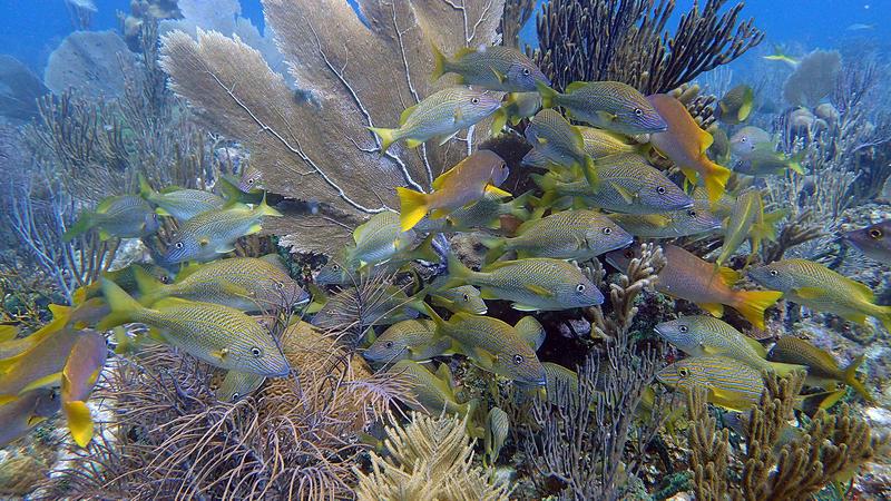 Gardens of the Queen Coral Reef, Cuba
