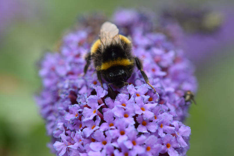 The European Union has voted to ban three pesticides known as neonicotinoids based on evidence that they pose a risk to bees.