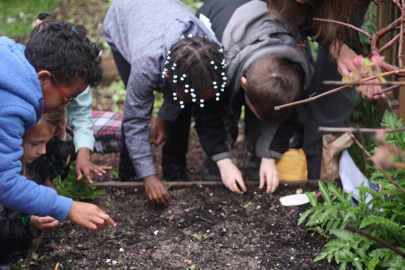 Children in the Hyannis West School Garden