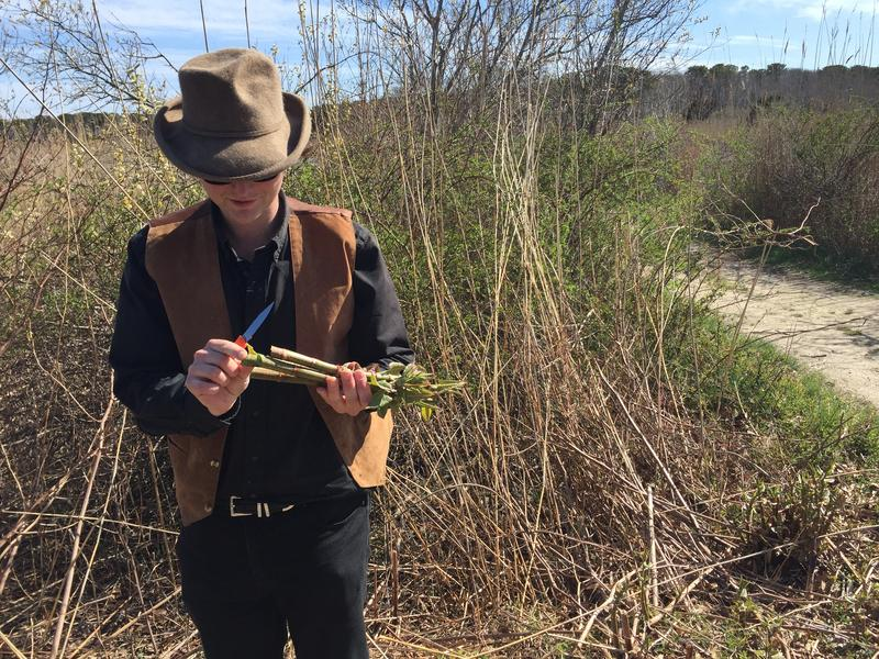 Milo Silva with Japanese knotweed where we went foraging. Oak Bluffs, MA, Spring 2018