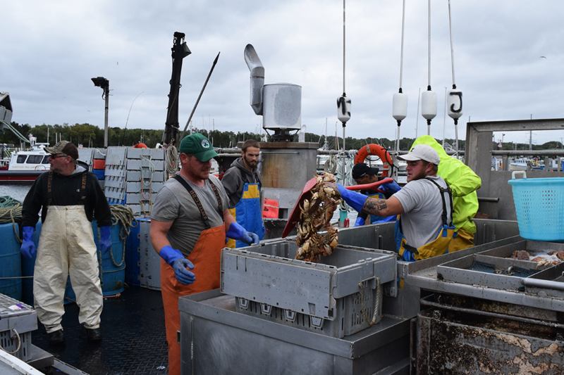 A fishing boat crew fills plastic tubs with Jonah crab for unloading.